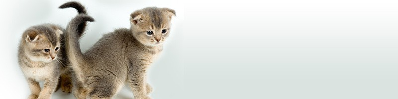 cropped-cropped-cats-header-20726-800x200-e14496663864161.jpg